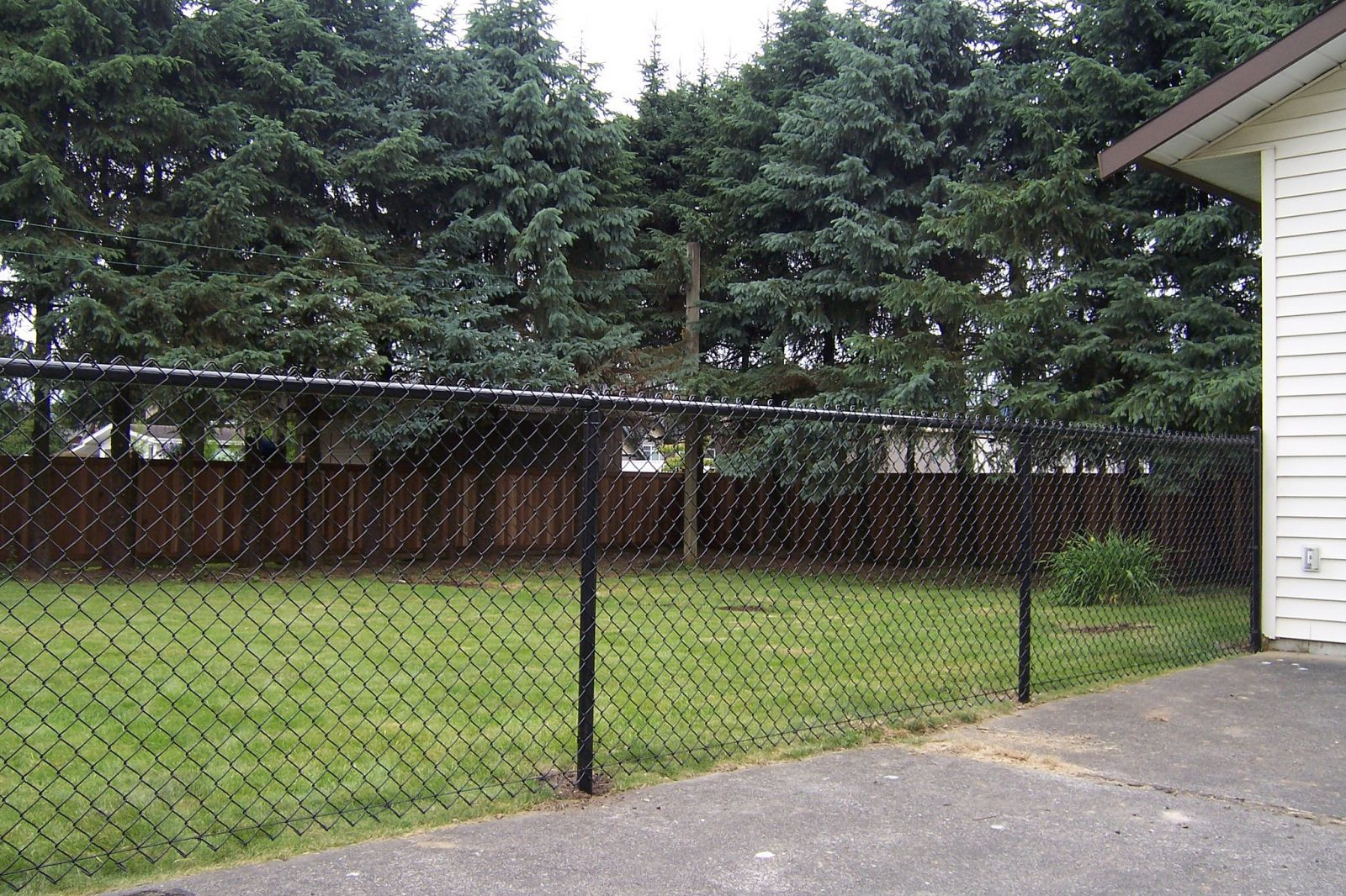Black chainlink fence around a yard in the Fraser Valley