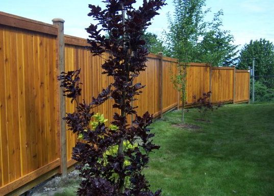 Five Reasons To Choose Wood Fencing For Your Backyard