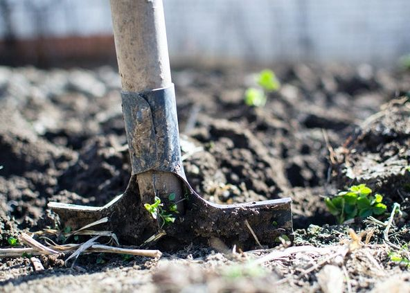 6 ways to improve your yard before the winter