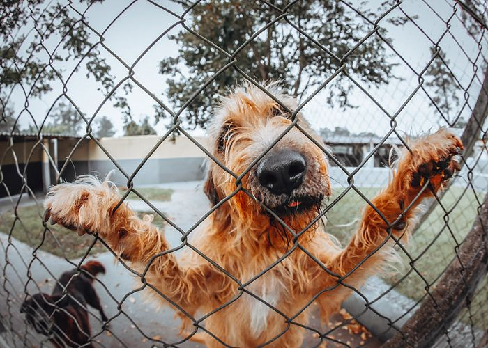 How installing a fence on your property benefits your pets