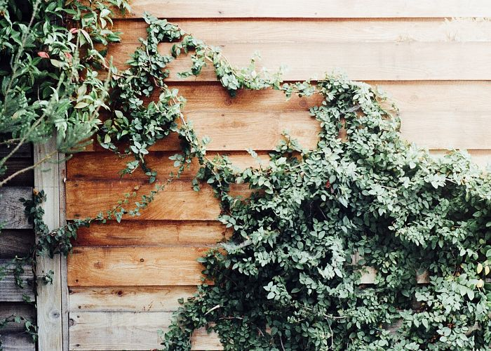 A Guide to Decorating Your Fence with Vines