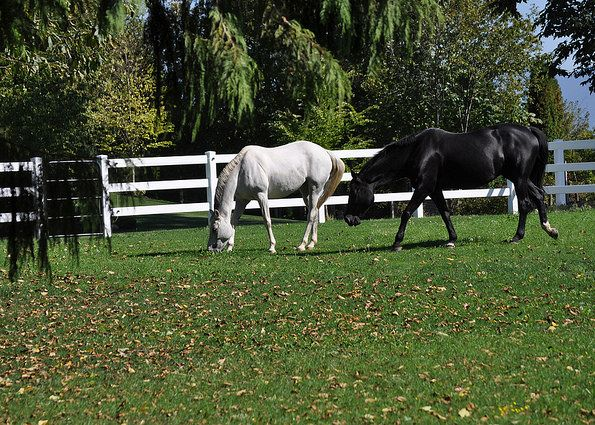 The Easy Guide to Great Horse Fencing